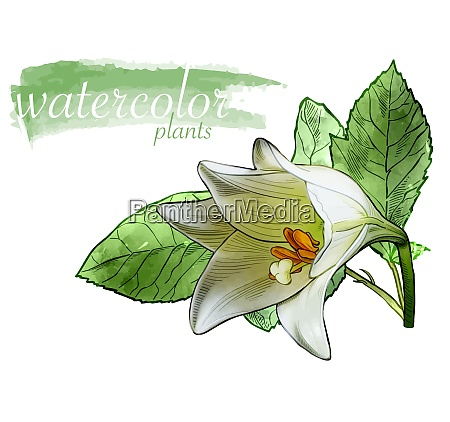 white watercolor flower with leafs