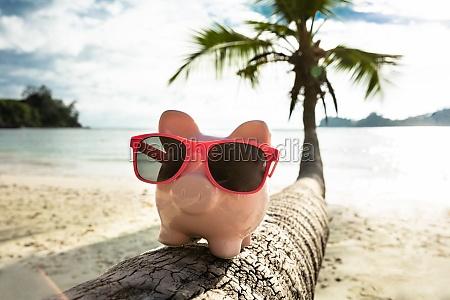 pink piggybank with sunglasses on tree