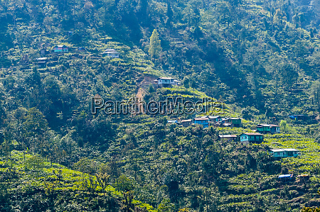 landscape panoramic view of green terraced