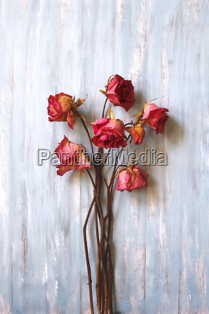 stillleben getrocknete rosen auf holz
