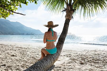 woman in bikini sitting on tree