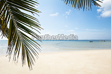 palm leaves turtle bay mahe island