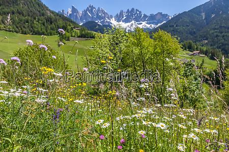 sommerliche bergwiesen im hinteren villnoesstal
