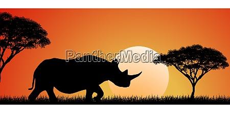 wildes afrikanisches nashorn bei sonnenuntergang