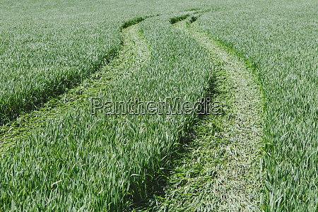 tire tracks in lush green field