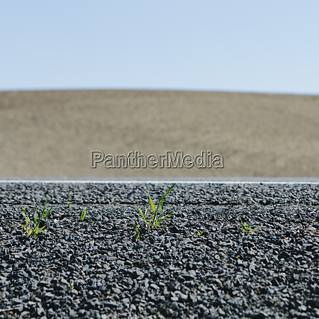 close up of weeds growing on