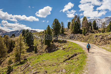 hiking trail on the alpe di