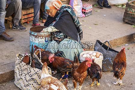 eritreische frau verkauft huehner im mercato