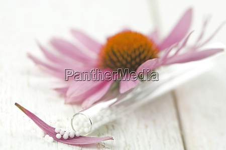 purple coneflower and glass tube of