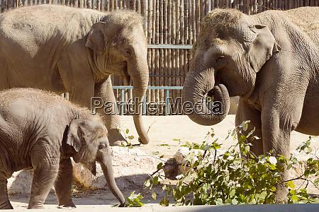 elefantenfamilie im zoo