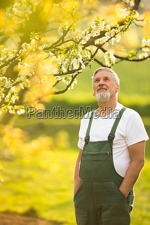 portraet von senior mann garten kuemmert