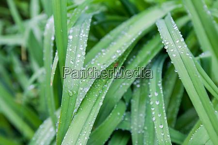 regen faellt am fruehlingsmorgen auf gruenes