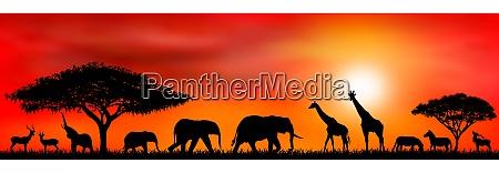 savannentiere auf dem hintergrund einer sonnenuntergangssonne
