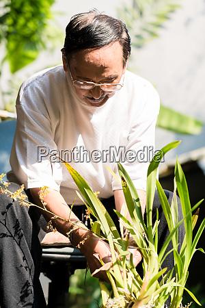 senior man planting flowers