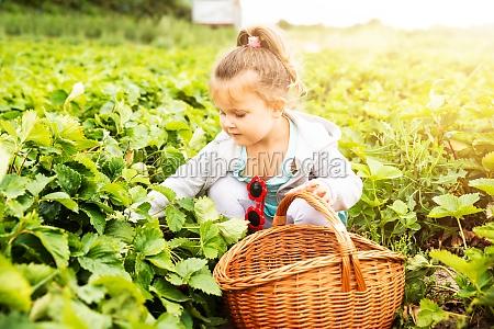 suesses maedchen picking erdbeeren