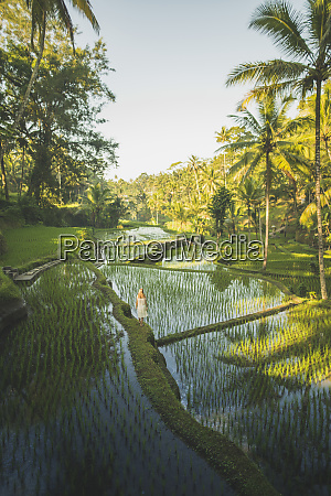 woman on terraced rice paddies in