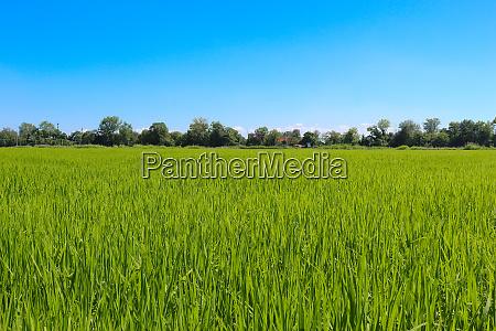 himmel feld blau gruen gras landschaft