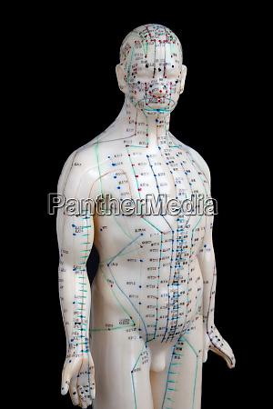 akupunktur modell