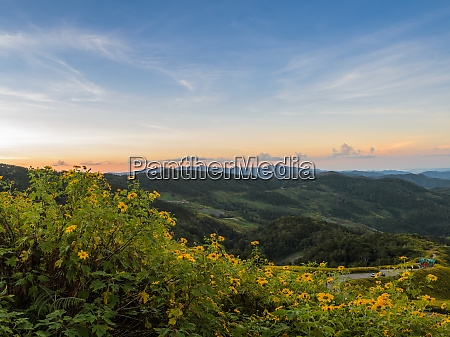 bergsonnenaufgangslandschaft mit mexikanischem sonnenblumenbluetental in meahongson