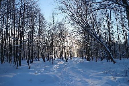 fussweg im winterwald