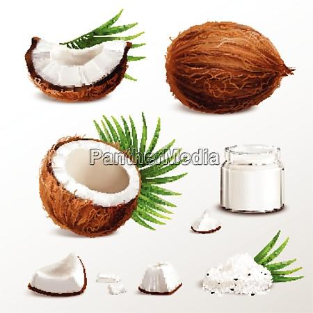 kokos realistische set mit nuss segmente