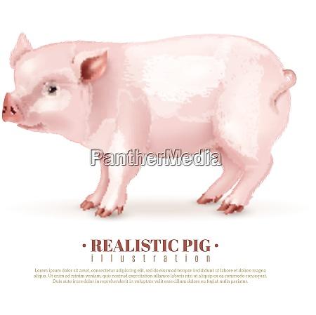 realistische rosa schweinchen seite ansicht isoliert