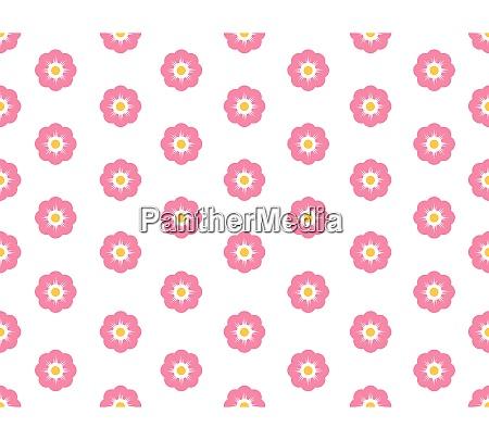 seamless pattern sakura flower on white