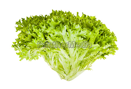 frischer gruener eisblattsalat isoliert auf weiss
