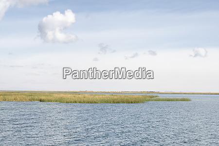 totora reeds on lake titicaca peru