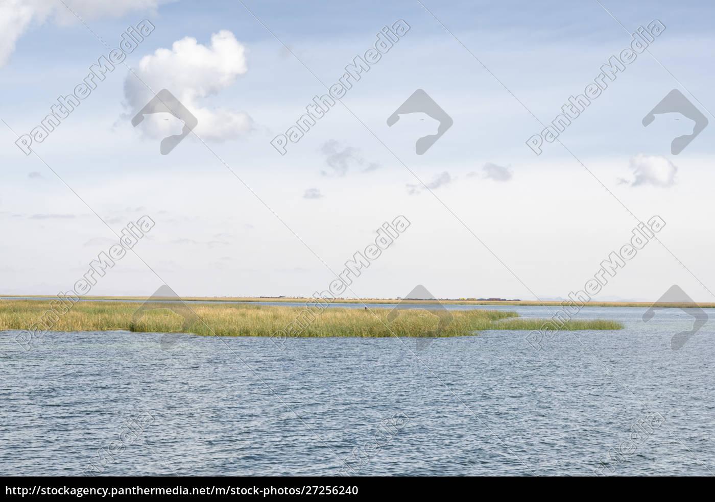 totora, reeds, on, lake, titicaca, , peru - 27256240
