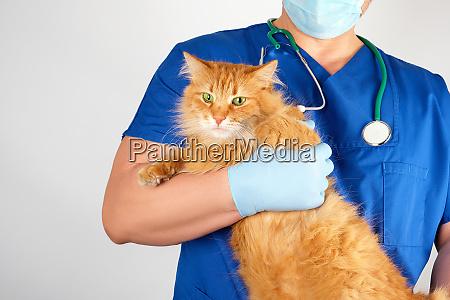 tierarzt in einer blauen uniform haelt
