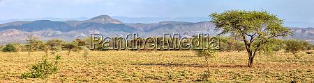 savanne im awash nationalpark AEthiopien