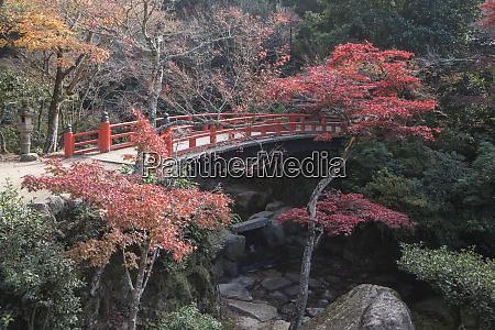 herbstfarbe miyajima praefektur hiroshima japan asien