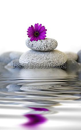 kieselstein cairn mit blume und wasser