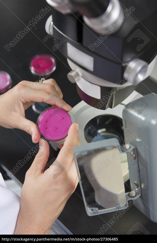 laborwissenschaftler, untersucht, bakterienkultur, im, wasseraufbereitungslabor - 27306485
