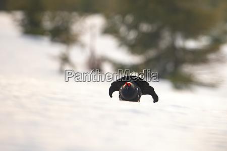 wildvogel in der wildnis mit platz