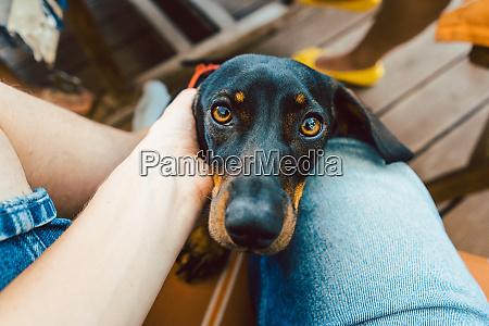 hund schaut durch runde des fotografen