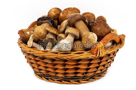 porcini mushroom in basket