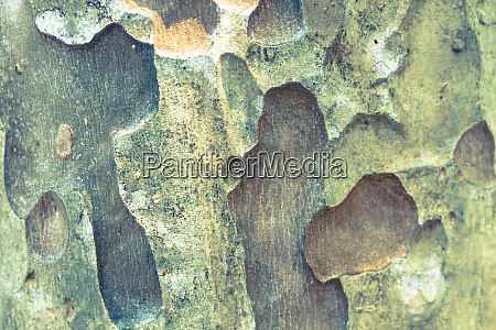texture of bark wood use as