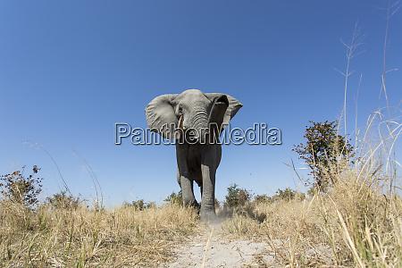 africa botswana chobe national park low