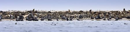 walvis bay namibia a colony of