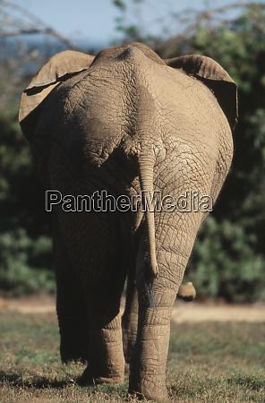 suedafrika addo elephant nationalpark elefantenwandern