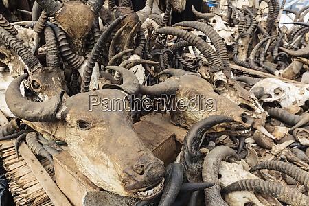 afrika westafrika togo lome antilopen und