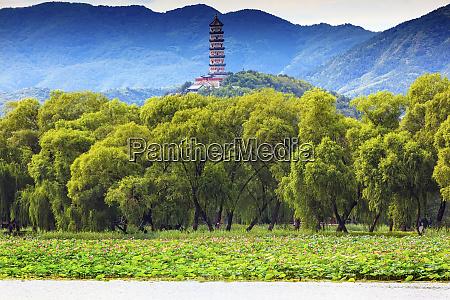 yue feng pagoda pink lotus pads