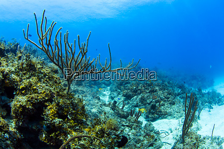 a soft coral is pictured among