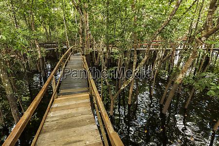a, wooden, walkway, at, a, jungle - 27335605