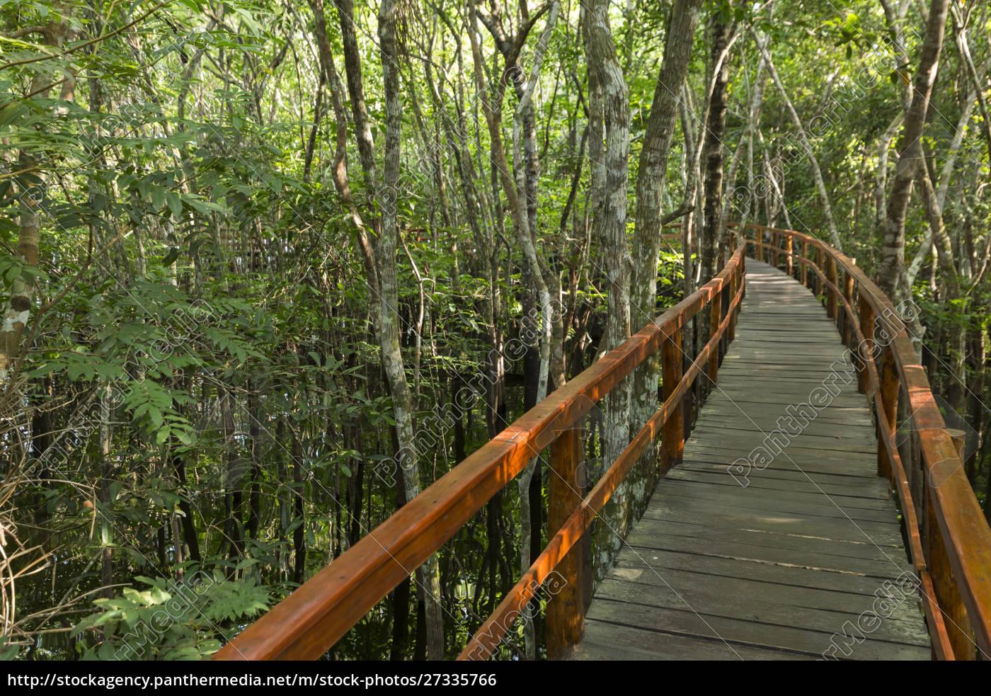 a, wooden, walkway, at, a, jungle - 27335766