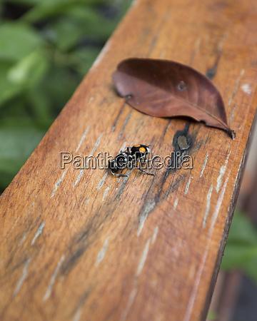 ein, totes, insekt, auf, einer, holzschiene - 27335607