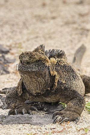 ecuador galapagos national park close up
