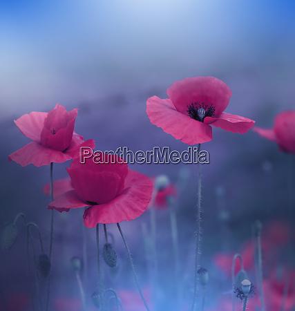 schoene blaue natur backgroundmacro foto von